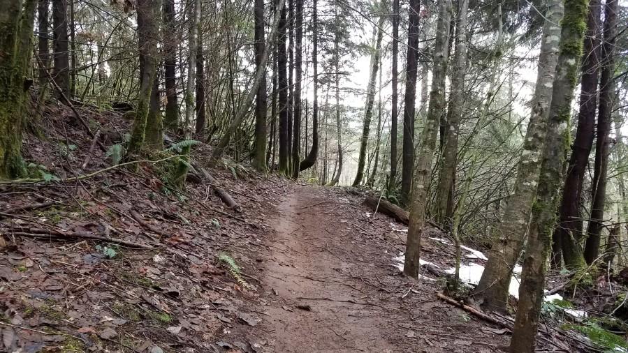 trail-dec